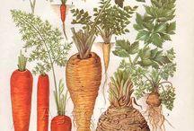 botanicals|ботаника