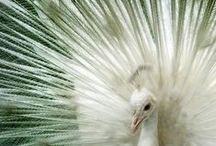 Beautiful Animals / by Lady Winter