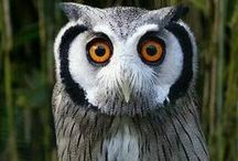 RUB✅OWLS / Welcome. Enjoy. DO NOT post inappropriate content (spam, nudity, sex, abuse, publicity, excessive pinning: more than 10 pins in time) or you will be removed. Do your best not to duplicate. Thanks to all.