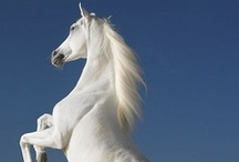 Horses ⓛ ⓞ ⓥ ⓔ