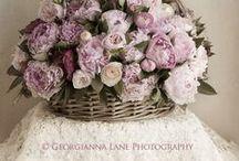 Lavender 6 Lilacs