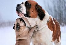 Animals / All creatures great and small. / by Pug Luv