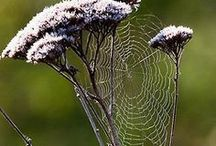 ~Webs & their Makers~ / by Sharon Heirholzer