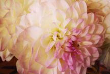 Flowers / Flowers, wedding flowers, gardening, flower arrangements, wedding bouqets, centrepieces