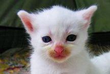 ❤ Kitty ⓛ ⓞ ⓥ ⓔ ❤