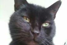 Black cats ⓛ ⓞ ⓥ ⓔ