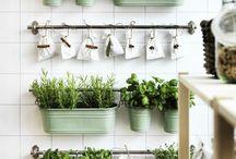 Plants & Creations