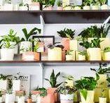 Indoor Garden / Indoor Gardening. Easy DIY Gardening ideas to brighten your home.