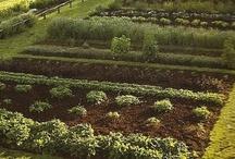 Gardens & Gardening / by grace dukes