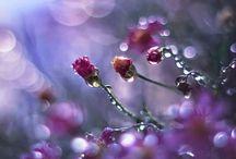 dew / by Dianne