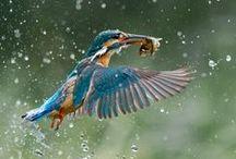 Photography - Nature & Animals