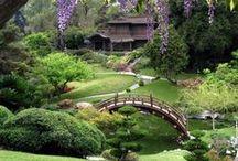 Garden/Outdoors / by Helen Storms