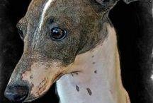 Celebrating the Italian Greyhound / Celebrating all things Iggie