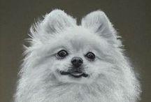 Celebrate Pomeranians! / Celebrating all things Pom