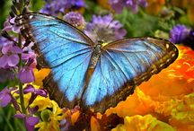 Butterflies / ~ Jewels of the Air ~
