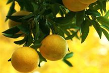Oranges  &  Lemons / ~ Say the Bells of St. Clement's ~