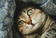 [Cats] Tabby Cats / Terrific tabby cats - for Charlie, Max, Ava, Coco & Millie.