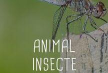 Animal / Insecte / Tous les trucs et astuces anti insectes et sur les animaux
