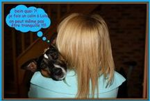 """Les aventures de mon chien """"Domino"""" - Jack Russel / photos de mon chien ..."""