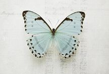 butterflies...x