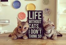 [Cats] Quotes / Cat quotes to put a smile on your face.