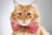 [Cats] Sophisti-cat / Bowties and fashion accessories maketh the cat!