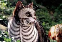 [Holidays] Halloween / Spooky cats for the scariest night of the year.