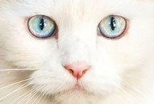 [Cats] White Cats / Stunning white cats!