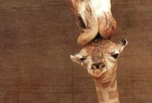 animals / Gorgeous animal pictures that make me smile everytime I see them