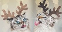 [Holidays] Christmas / Wishing you a Meow-y Christ-mouse!