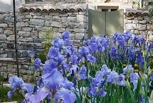 Gardening / by Nancy Bull