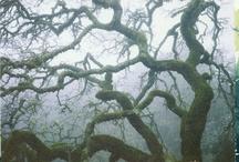 i heart TREES / by Katie Menke