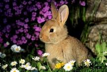 Easter / by Nancy Bull