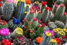 Cactus y suculentas / by Rosalía Sastre Velasco