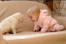 Amizade / A natureza animal no seu melhor