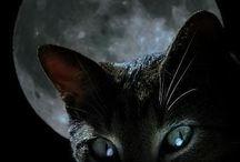 Gatti Neri e Dintorni.. / La Notte Li Protegge.