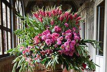 Floral / by Brenda Accornero