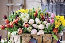 I love the smell of spring / Spring - flowers, feelings, Easter