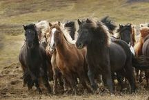 Equestrian ♥