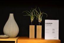 Tischdeko mit Tillandsien / Tillandsien als lebendes Dekorationselement