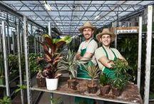 Das Grüne Daumen-Set einfach erklärt / Bei EVRGREEN.de bekommst Du alle Pflanzen im Grüne Daumen-Set...und was darin enthalten ist, zeigen wir Dir hier. :_)