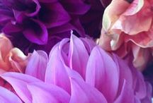 Purple shades - lila árnyalatok