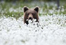 Wildlife / Creatures of the wild