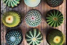 Cactus / You beautiful prickly plants!