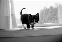 Cats / ....weils eben Katzen sind....