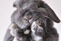 Fuzzy Animals! X