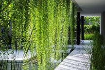 Garden Inspiration / Create the Look!