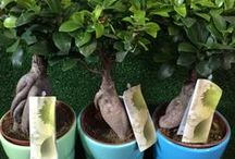 House Plant Retail / Let the outside in! House Plants we currently have on our stalls