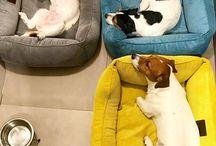 Mikki, Mira & Banana Jack Russel Terrers / О питомцах, собаках Джек Рассел Терьер - Микки, Мире и Банане