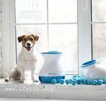 iFetch - automatic ball launcher / iFetch - игрушка для собак. Автоматическая катапульта, позволяющая вашему питомцу играть самостоятельно!